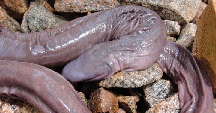 serpentpenis