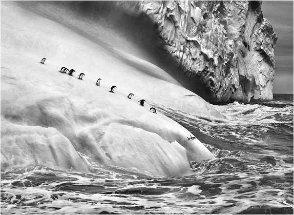 plongeon du pingouin
